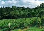 auckland Wine Region