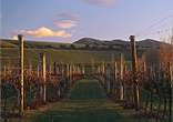 martinborough Wine Region